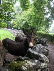 donkeys at burn ratty village